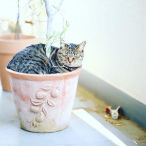 植木鉢のネコ