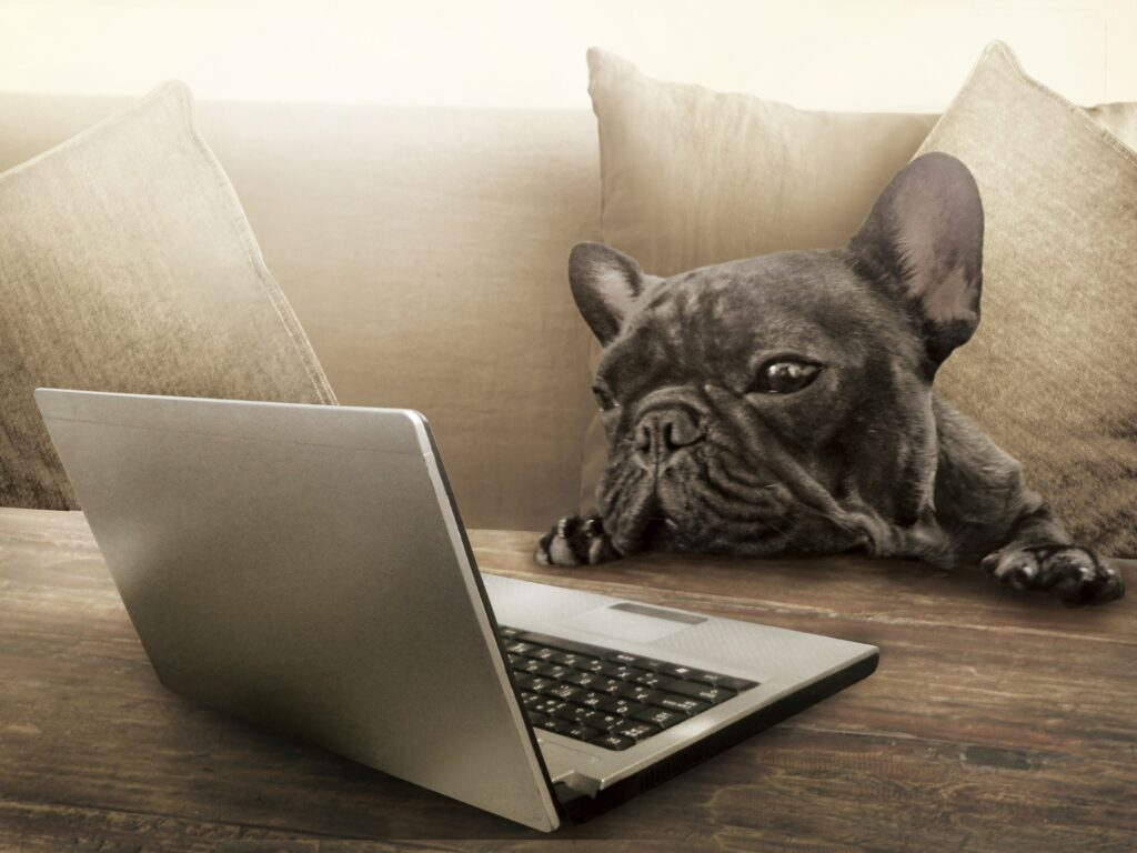 犬がパソコンを見ている写真